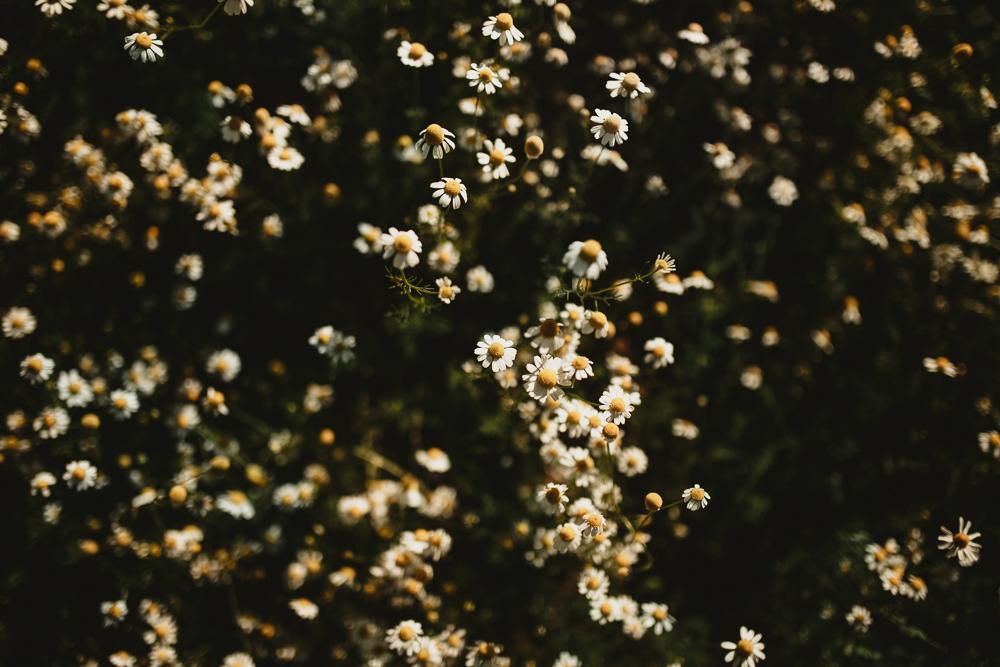 ensaio+campo+camomila+curitiba+sol+casal+flores-5